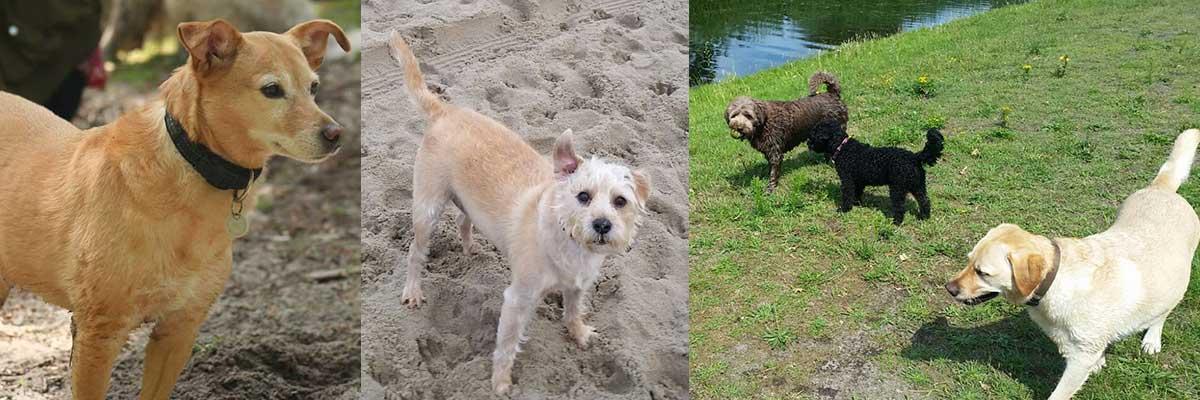 Hondenuitlaatservice Nessiej's Walk And Sit Leidschendam Voorburg Den Haag