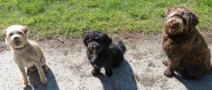 Hondenuitlaatservice Voorburg, Leidschendam en Den Haag, Nessiej's Walk And Sit